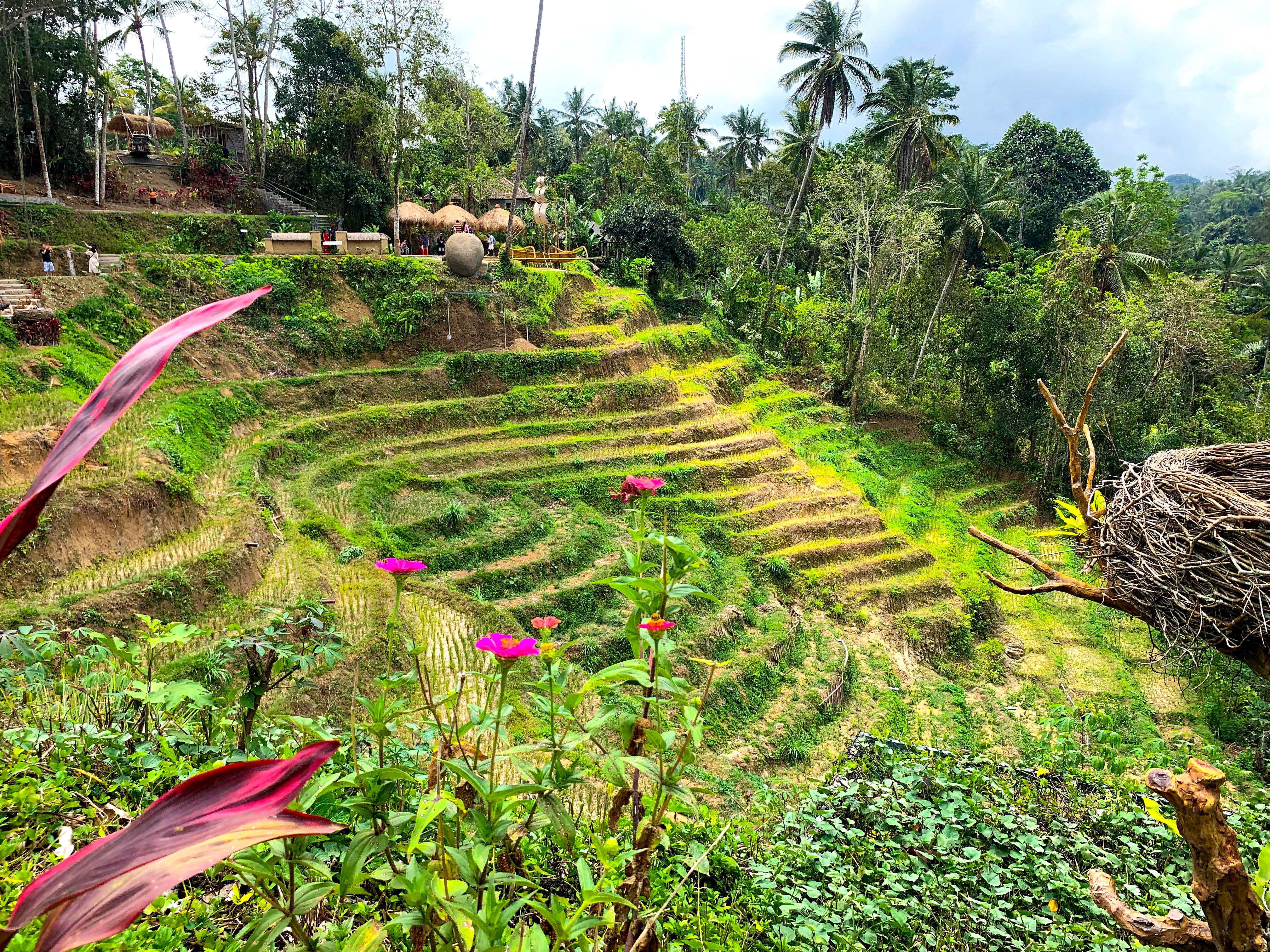 Les rizières de Tegallalang à Bali