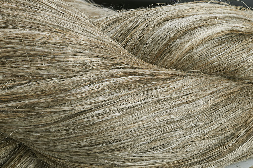 Alternative au coton: fibre de lin